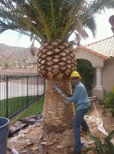 Basin Pocket Palm Tree Removal
